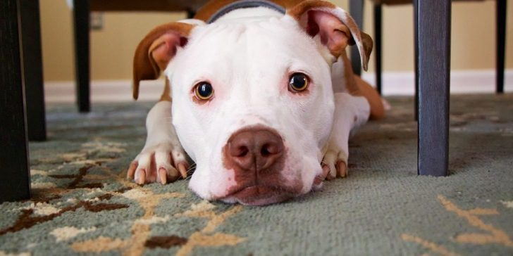 Dog Camera for Medium Breeds - Post Thumbnail
